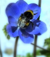 Bumble Bee by riviera2008