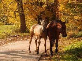 Autumn comes on a brown horse by MirachRavaia