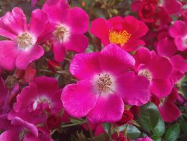 flowers pink by demonlucy
