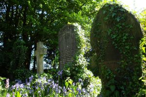 The Ivy and The Bluebells by Estruda