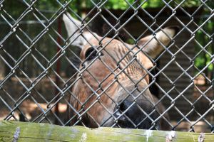 Waccatee Zoo Zonkey 2 by MrsChibi