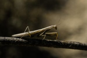 Sepia. by Ithilwenion