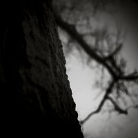 A tree by afewimages