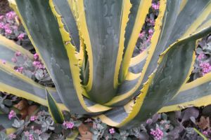 Plant by FreeakStock