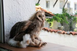 Domestic griffin by AlvaroFuegoFatuo