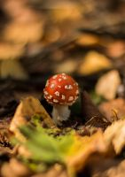 Fly agaric by Alsiza