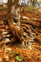 Bare roots by asaph70