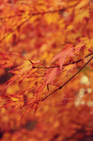Colours of autumn by spmich