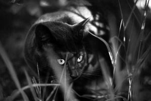 jungle cat by aimeelikestotakepics