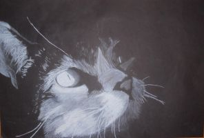 Charcoal Cat by KillerKitteh