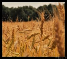 Grain by DianaLobriglio