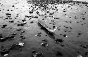 Driftwood by paters87