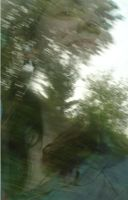 reflection. train window by Din0saur
