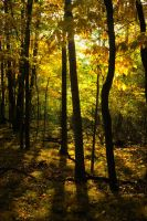Golden Wood by dragon-fly-to-me