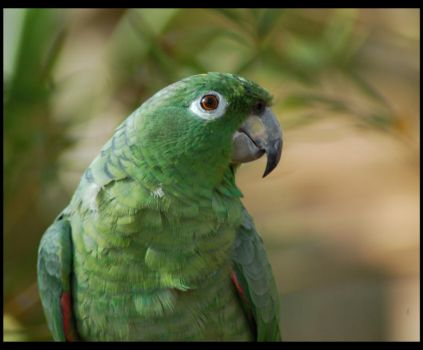 Green Parrot by Souvenirs