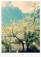 Lovest spring. by Linoote