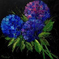 Hydrangeas 66 by pledent