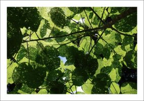 Patchwork of Stinging Leaves by Cameron-Jung