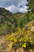 Rocks and Sunflowers by mjohanson