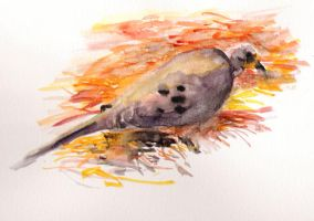 Mourning Dove by Trustkey