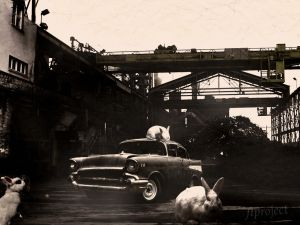 Follow The White Rabbit by ftproject