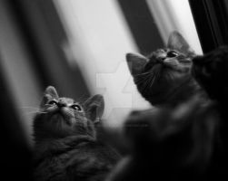 Reflection of us two by PinkCatsCookieShop
