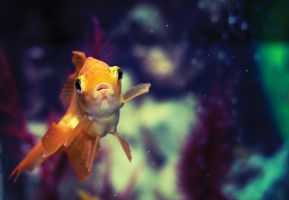 Fishi by Timosaby