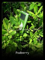 Podberry by moiety