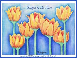 Tulips in the Sun I by AmedaN