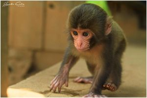 Baby Monkey by jaydoncabe