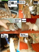 Cha'mone ratties by littlebluewolf