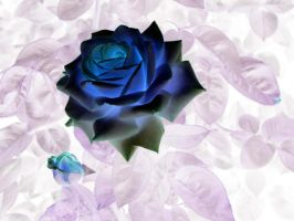 negative effect on the Rose by Nipntuck3