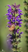 Going For the Nectar by mjohanson