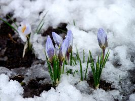 Spring 3 by CKNelson