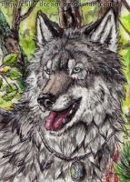 ACEO-LabradoriteWolf by Cally-Dream