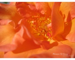 Moments of Spring 24 by love1008