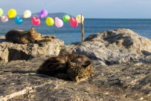 Istanbul cats sleeping on a shore by AneiKhaar