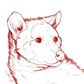 Weasel sketch by CatherineSt