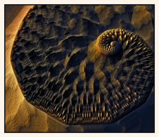 Fossil in the sand by Zyteche