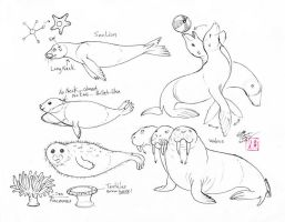 Draw Seals, Sea Lions and Walrus by Diana-Huang