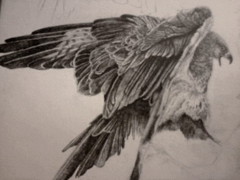 Bird Detail Sketch by Lykouros