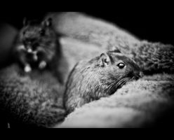 Korvinsky the Gerbil III by Veistim