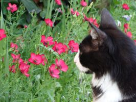Cat flowers II by fairling-stock