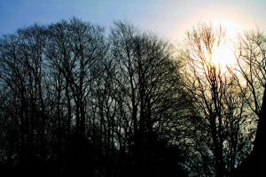 Blue sky andsun behind trees by PythonIt