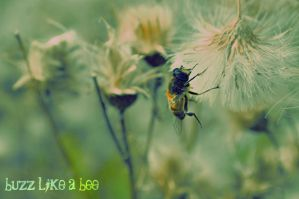 Buzz Like A Bee by pictureofsound