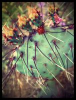 cactus_05 by fuamnach