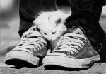 Caught between two shoes by Rajacenna