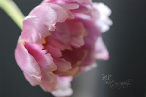 -199- Gentle Touch by MiriamPeuser