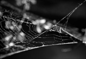 Abstract Webs by duvessa2