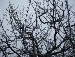 tree branches by KTVL-resources